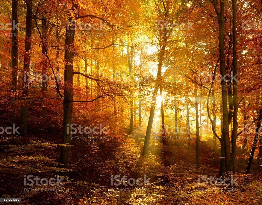 Beleuchtete Herbst Wald mit Sonnenstrahlen durch Nebel, Leafs wechselnden Farben – Foto