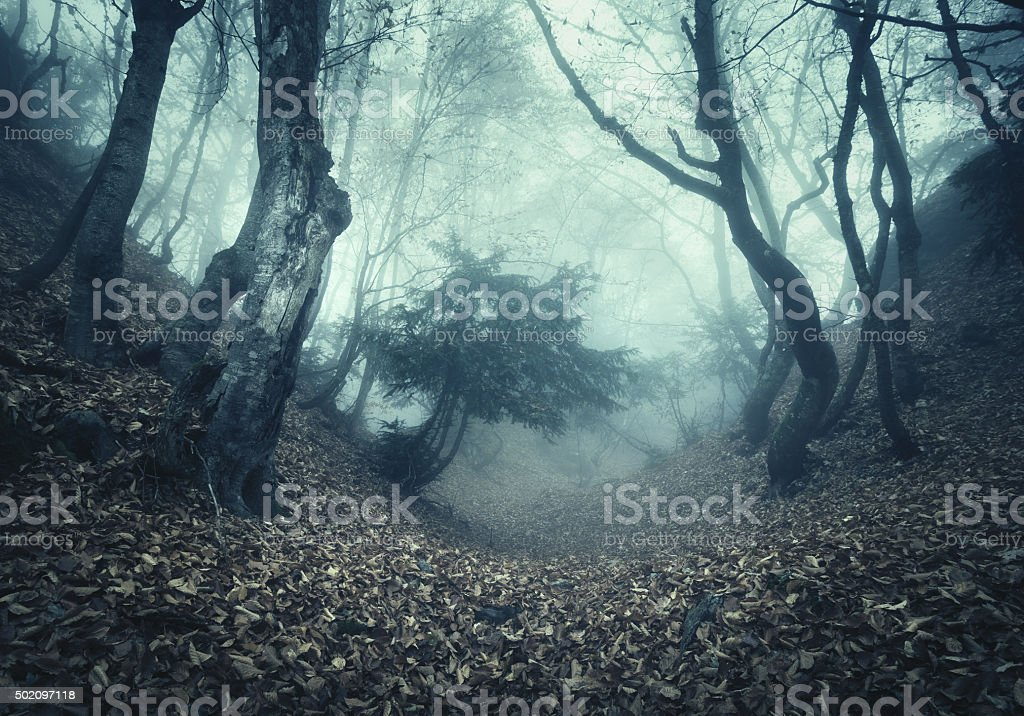 Autumn forest in fog. Beautiful natural landscape. Vintage style stock photo