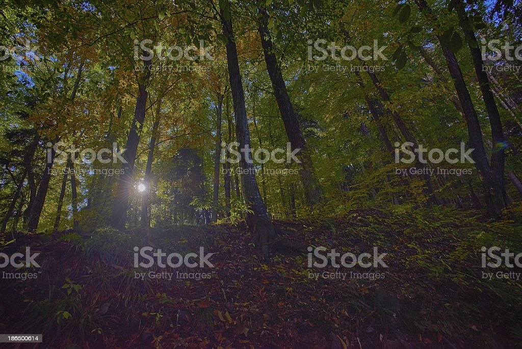 Autumn forest in HDR royalty-free stock photo