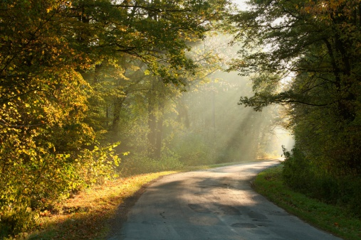 istock Autumn forest in misty morning 176889877