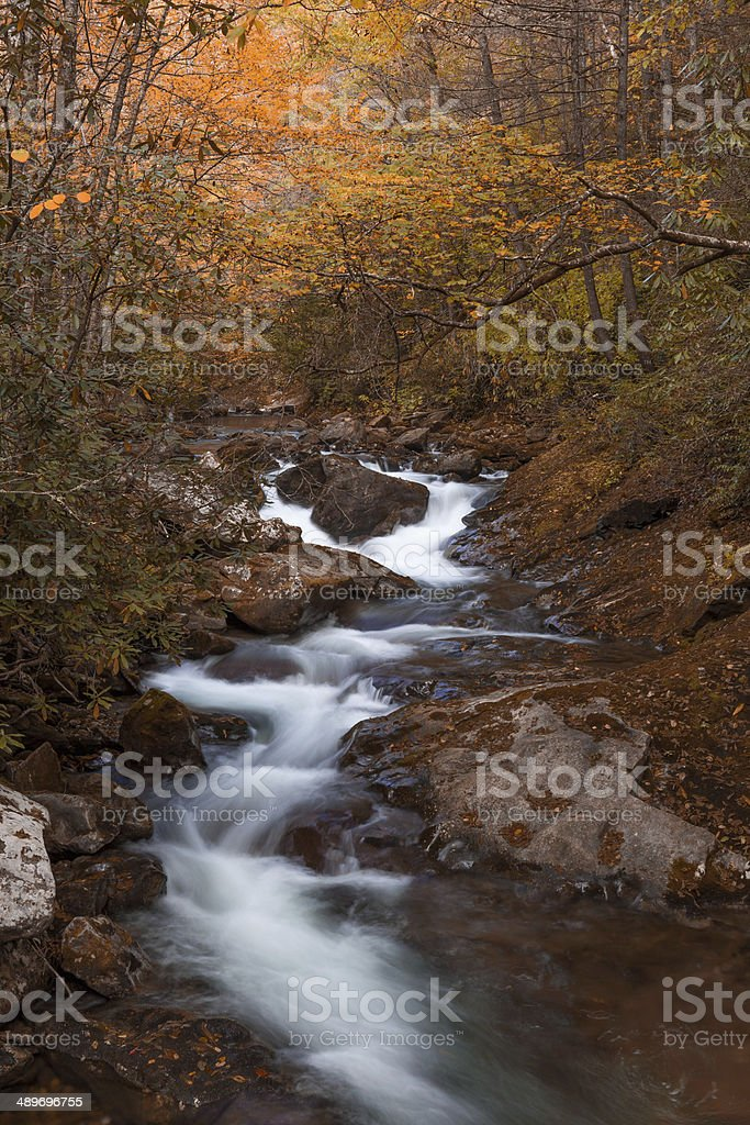 Autumn forest in Pisgah Forest, North Carolina stock photo