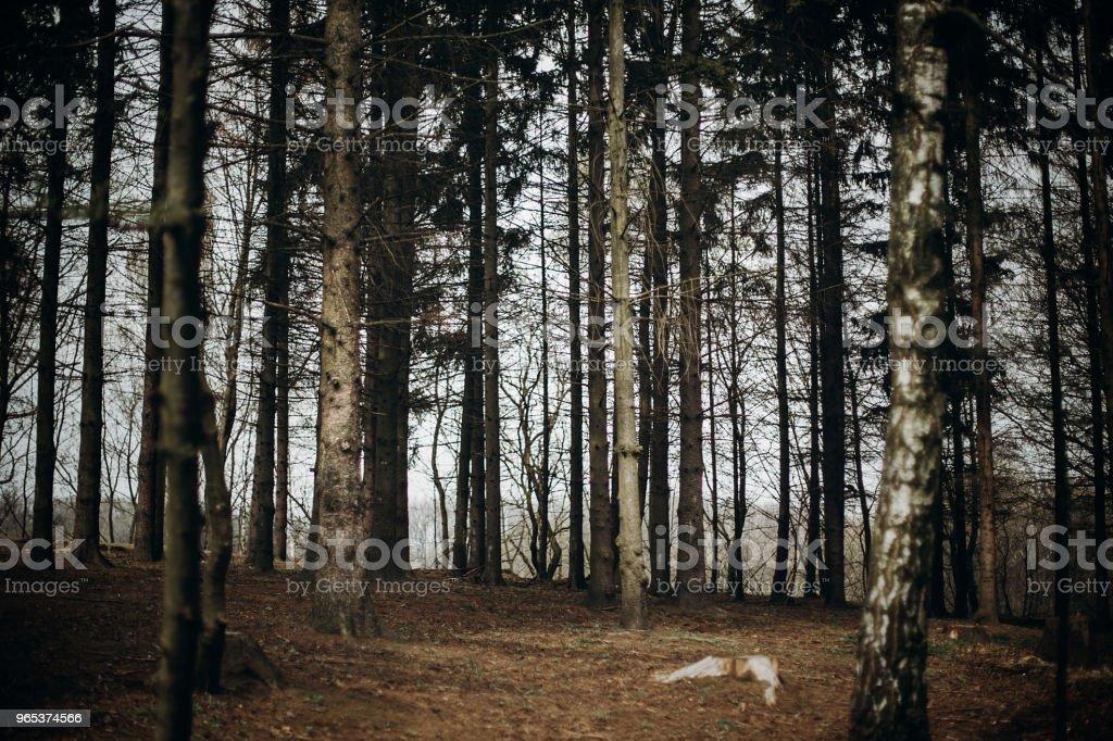 秋天森林在斯堪的納維亞國家公園度假勝地, 秋天顏色-下落的葉子在白樺樹附近, 自然概念 - 免版稅乾的圖庫照片