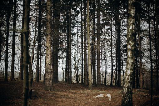스 칸디 나 비아 국립 공원 리조트 단풍자작나무 자연 개념 근처 낙된 엽에서에서가 숲 0명에 대한 스톡 사진 및 기타 이미지