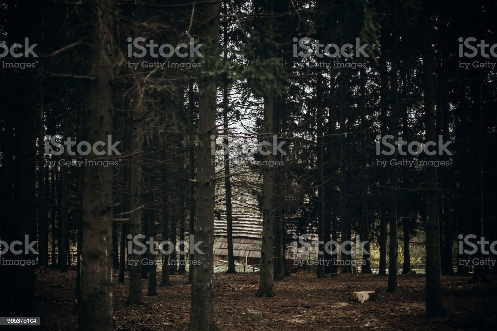 Autumn forest in Scandinavian national park resort, autumn colors - fallen leaves near birch trees, old wooden building in the background, nature concept royalty-free stock photo