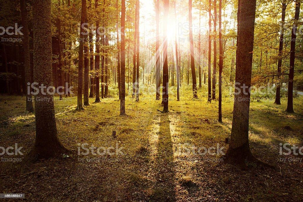 Herbstlicher Wald im Sonnenuntergang Lizenzfreies stock-foto