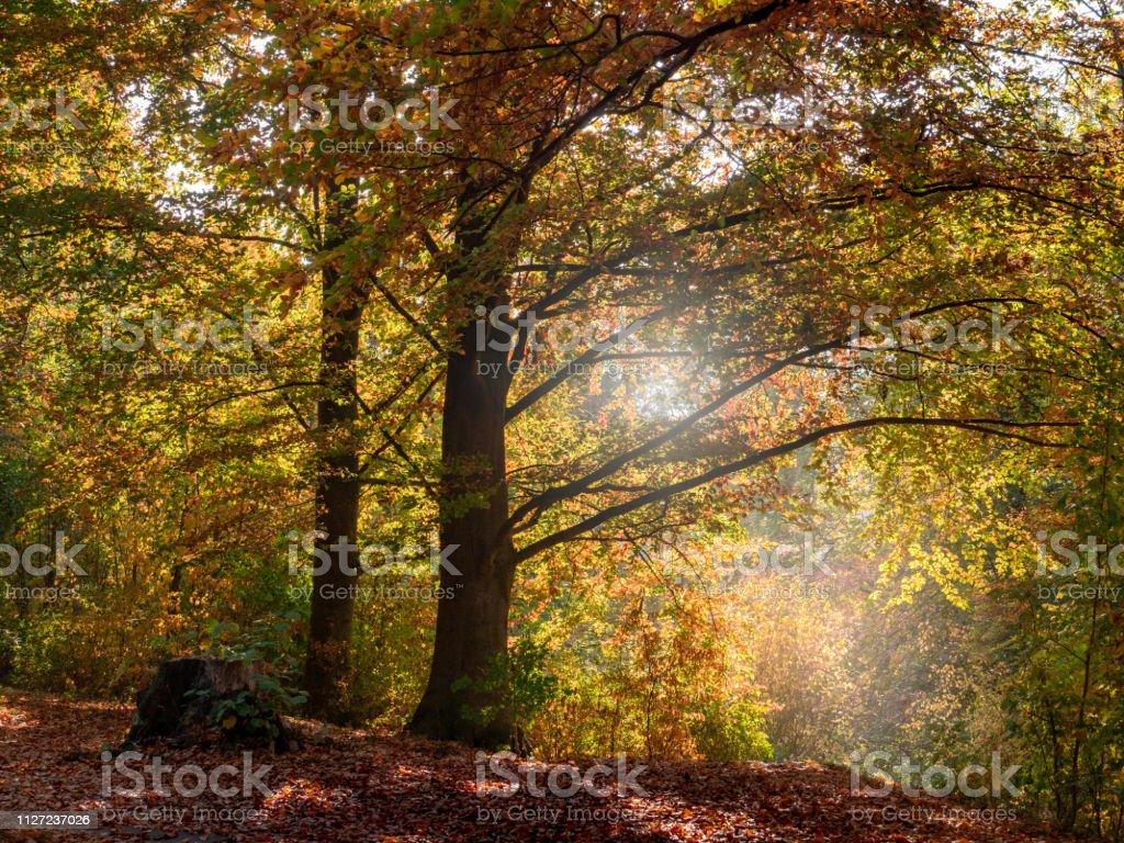 Herbstwald im Sonnenlicht – Foto