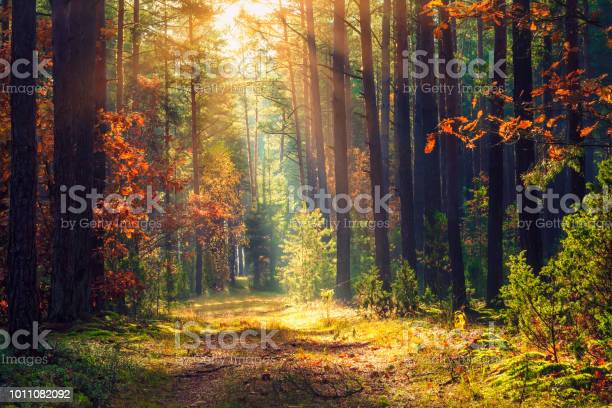 Photo of Autumn forest landscape. Colorful foliage on trees and grass shining on sunbeams. Amazing woodland. Scenery fall. Beautiful sunrays in morning forest