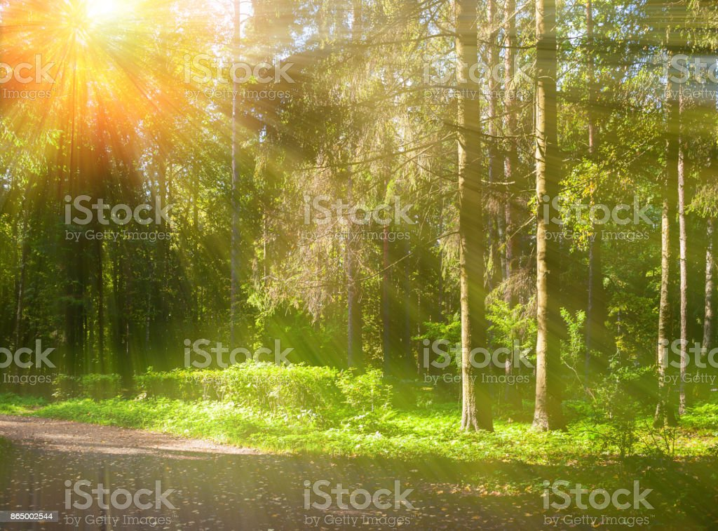 Autumn forest landscape with trees in the forest stock photo