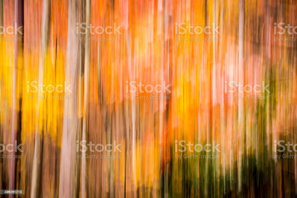 Autumn Forest Motion Blur stock photo
