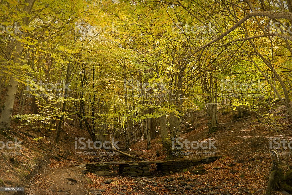 Autumn forest. October stock photo