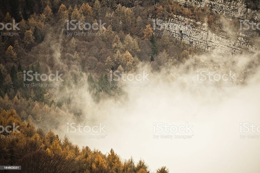 Autumn Forest of Beach Tree and Fog in the Alps stock photo