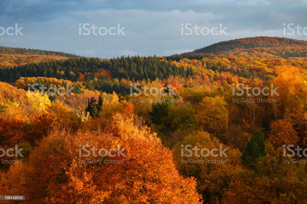 Autumn forest overview in evening sunlight stock photo