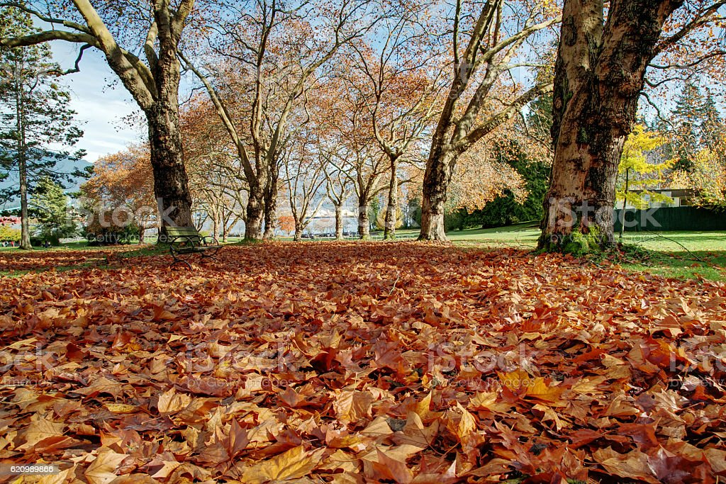Autumn forest path covered with fallen leaves foto royalty-free