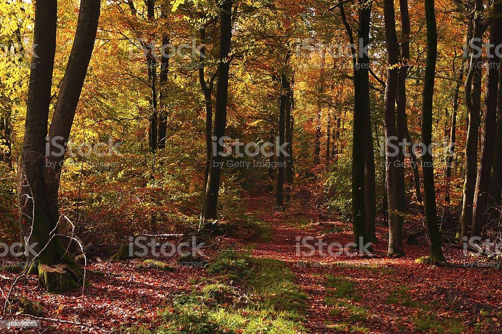 Autumn forest path stock photo