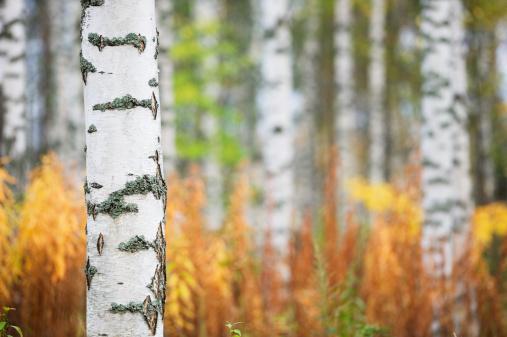 istock Autumn forest 157742671