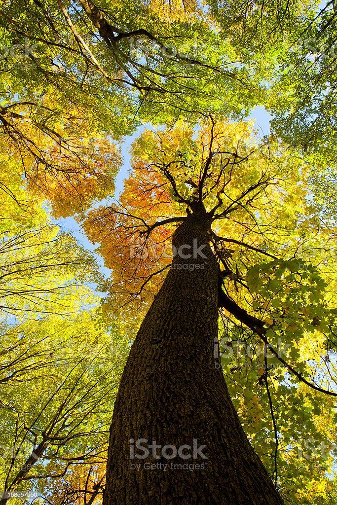 베스키드 (Beskid) 산의 가을 숲 royalty-free 스톡 사진