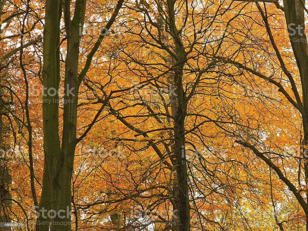 Autumn forest. royalty-free stock photo