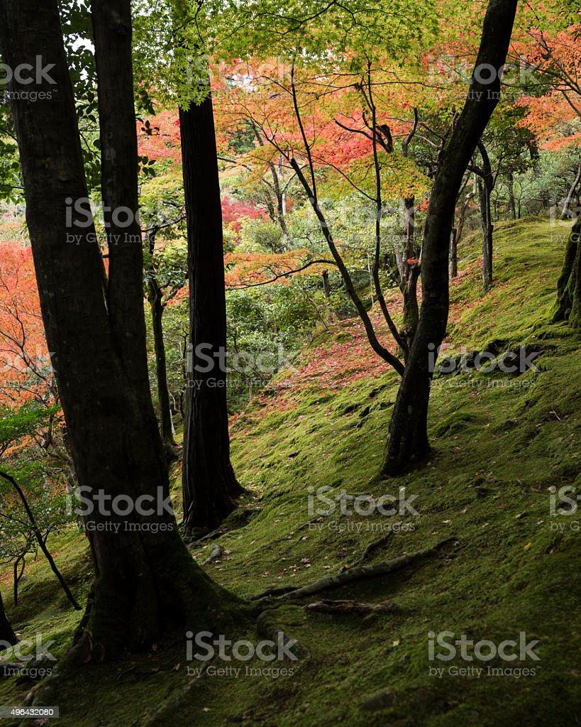 秋の森 - 2015年のロイヤリティフリーストックフォト