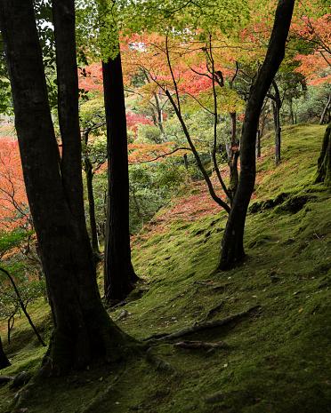 秋の森 - 2015年のストックフォトや画像を多数ご用意