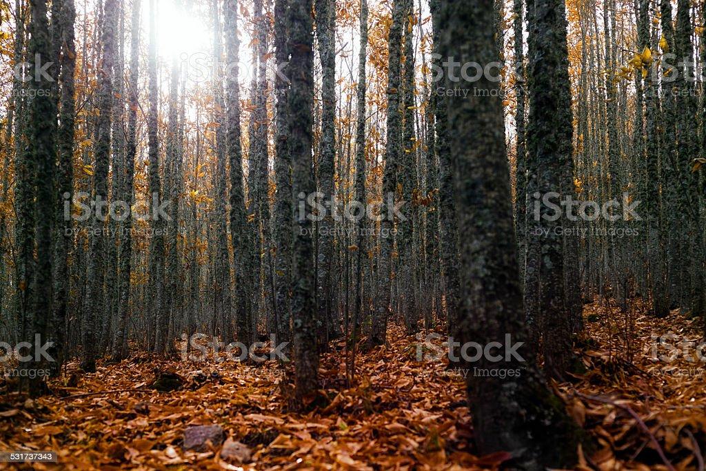 Bosque de otoño - foto de stock