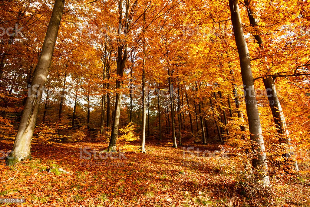 Foresta d'autunno  foto stock royalty-free