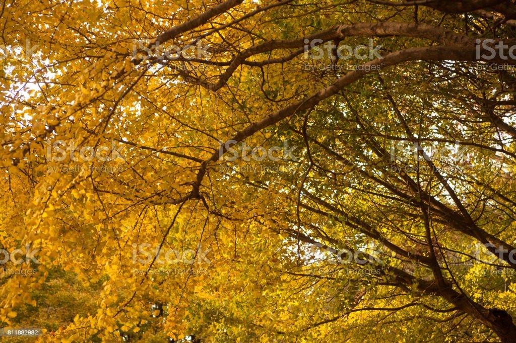 秋の森ます。 ストックフォト