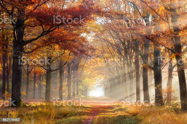 Photo of Autumn forest
