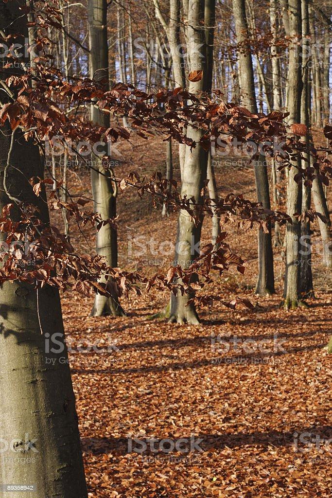 秋の森 ロイヤリティフリーストックフォト