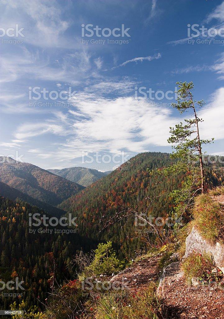 Floresta de outono - Foto de stock de Amarelo royalty-free