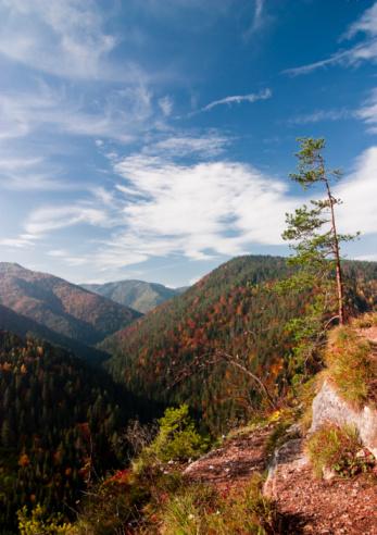Foto de Floresta De Outono e mais fotos de stock de Amarelo