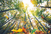 Colorful autumn forest. View from below.