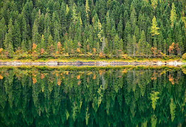 autumn forest reflected in calm lake. gosausee, austria. - symmetry stock photos and pictures