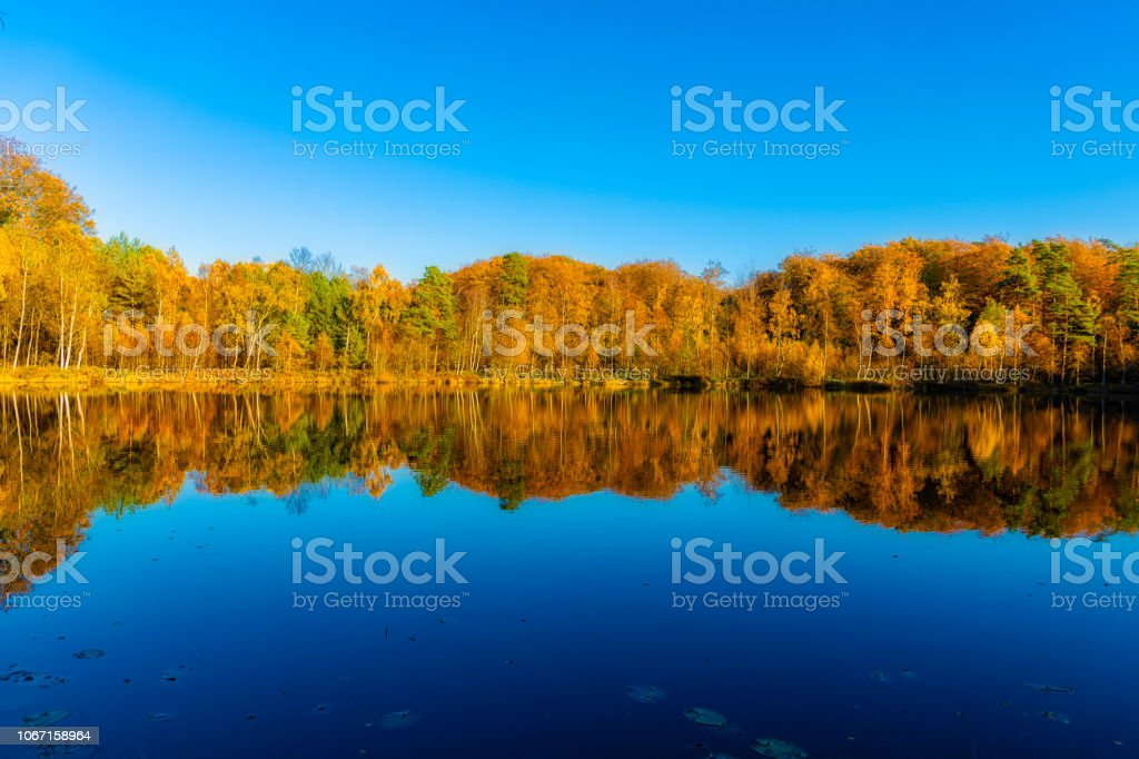 Hösten skogen återspeglas i sjön i Sverige bildbanksfoto