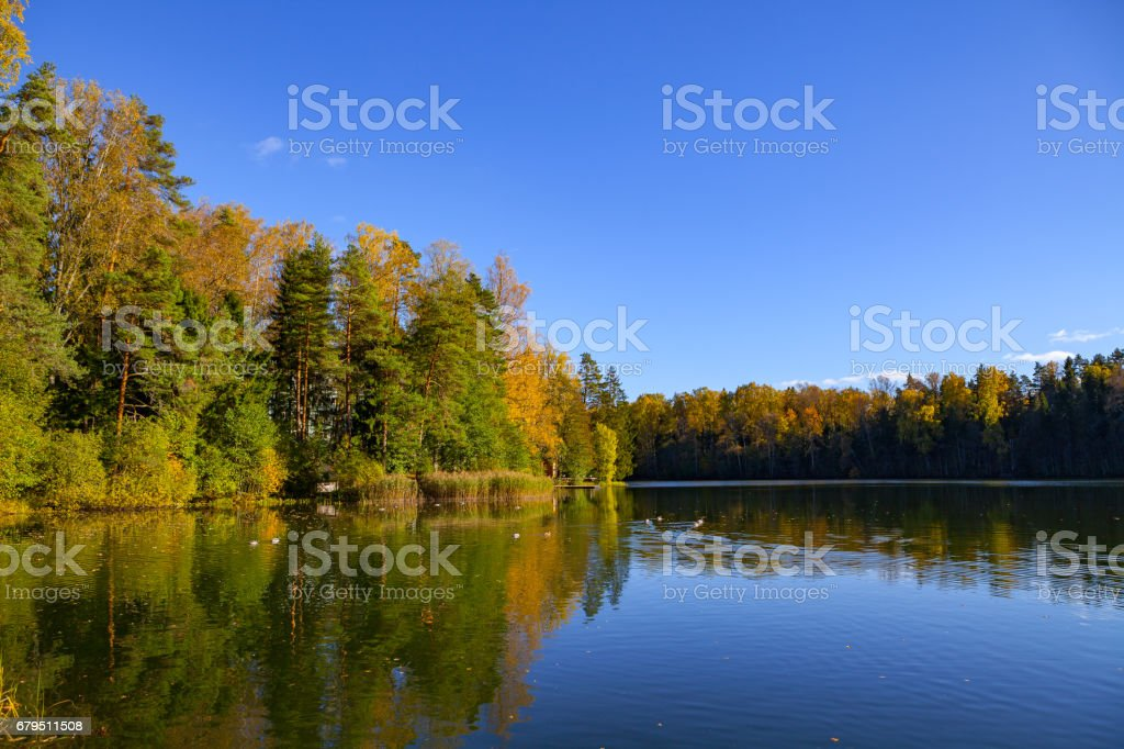 Autumn forest reflection in pond, Aegviidu, Estonia royalty-free stock photo