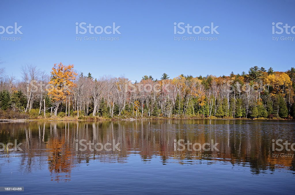 Autumn Forest Reflection royalty-free stock photo