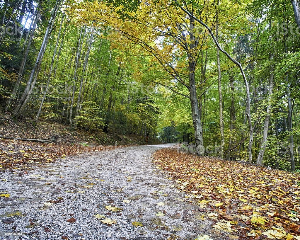 Autumn forest road in HDR royalty-free stock photo