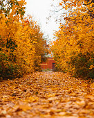 Autumn forest road landscape. Autumn leaves road view. Autumn Landscape. Beautiful autumn landscape with yellow trees and sun. Colorful foliage in the autumn park. Autumn season concept. Soft focus