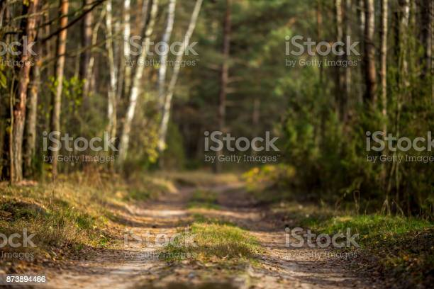 Photo of Autumn Forest Road - Nature Wallpaper with Selective focus
