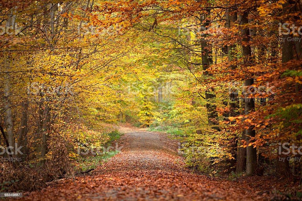 Autumn forest scene royalty-free stock photo