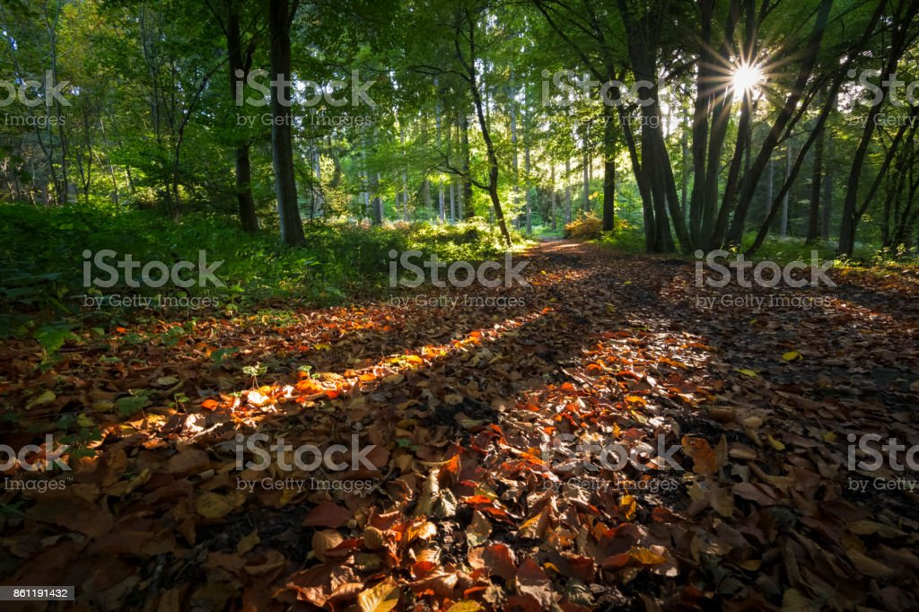 Automne paysage forestier avec des rayons de soleil de la chaude lumière éclairant un sentier menant à la forêt - Photo