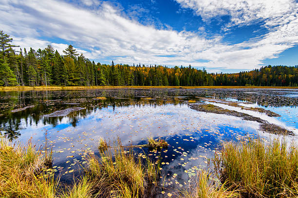 Autumn Forest Surrounding a Pond stock photo