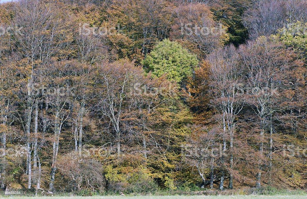 Herbst Wald Wand Lizenzfreies stock-foto