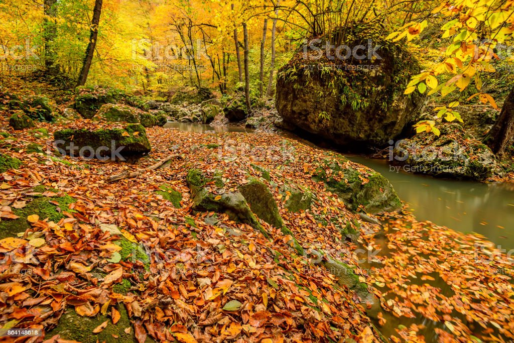 Autumn forest with creek royalty-free stock photo