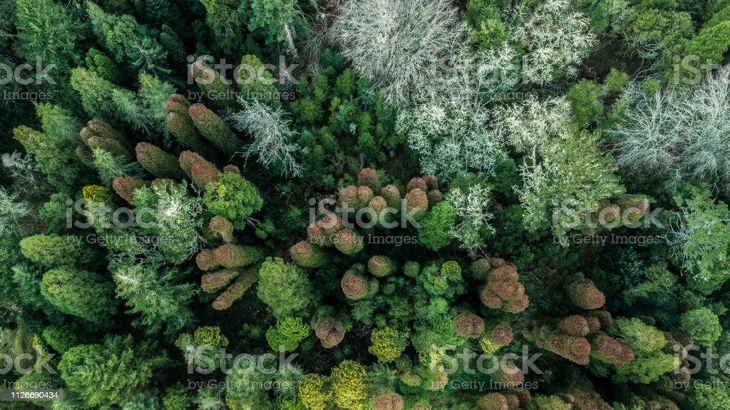 floresta de Outono com árvores verdes e laranja na ilha da Madeira Portugal - foto de acervo