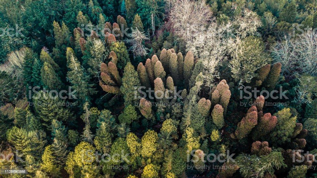 floresta de Outono com árvores de verdes, amarelas e laranja na ilha da Madeira Portugal - foto de acervo