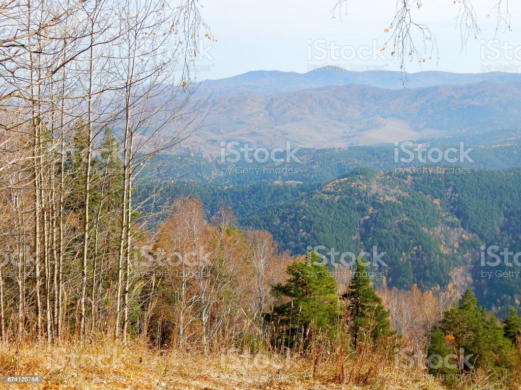 Autumn forest with mountain view royalty-free stock photo