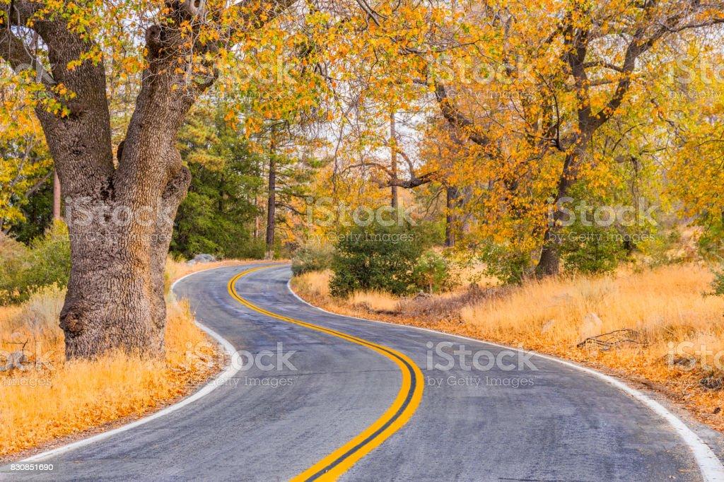 Autumn forest with road at Big Bear Lake San Bernardino, Ca stock photo