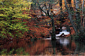 autumn in the park,autumn leaves in forest,reflections in water,abstract background,lake,ieaf