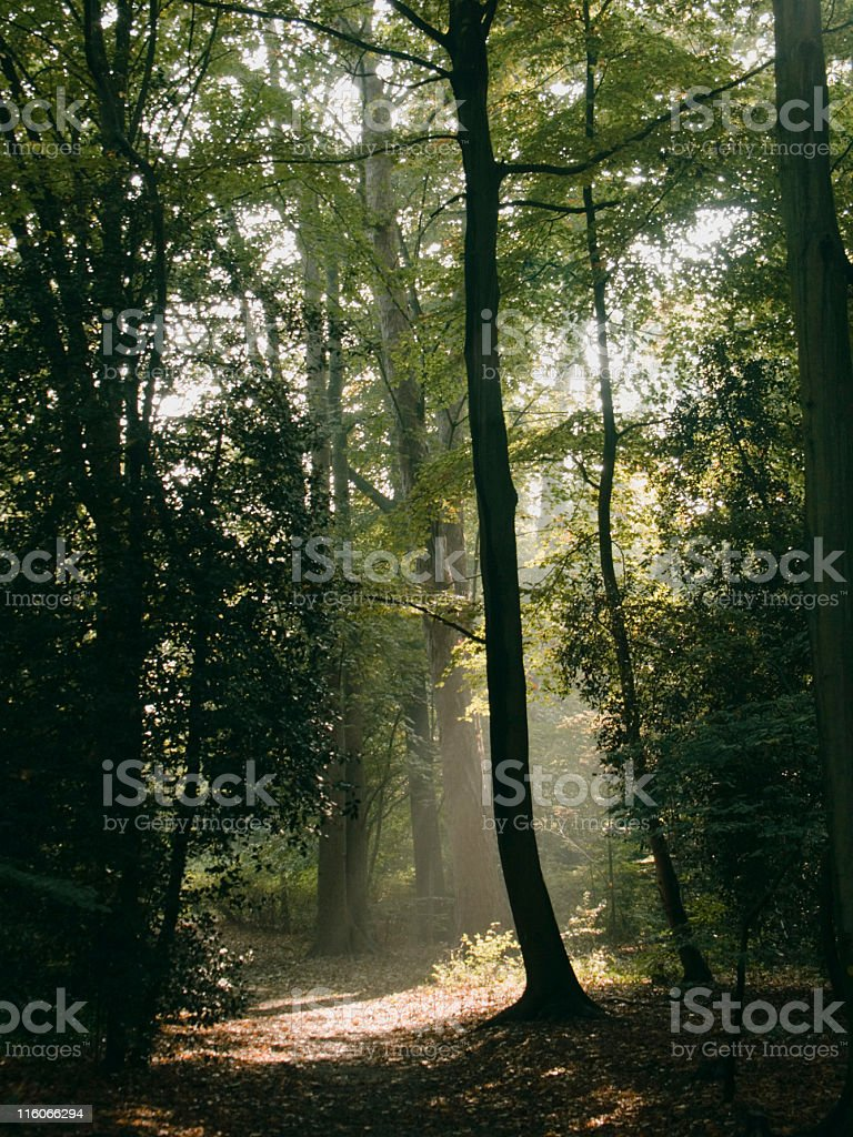 Autumn forrest stock photo