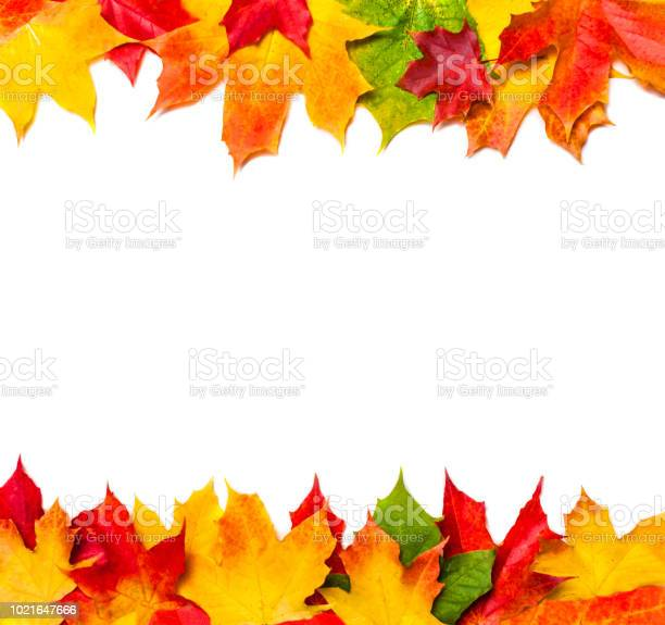 Autumn frame composition made of autumn leaves on white background picture id1021647666?b=1&k=6&m=1021647666&s=612x612&h=5537obyzmrf 83vpyozzzsr1rbxkj3jpsqggnyxijlg=